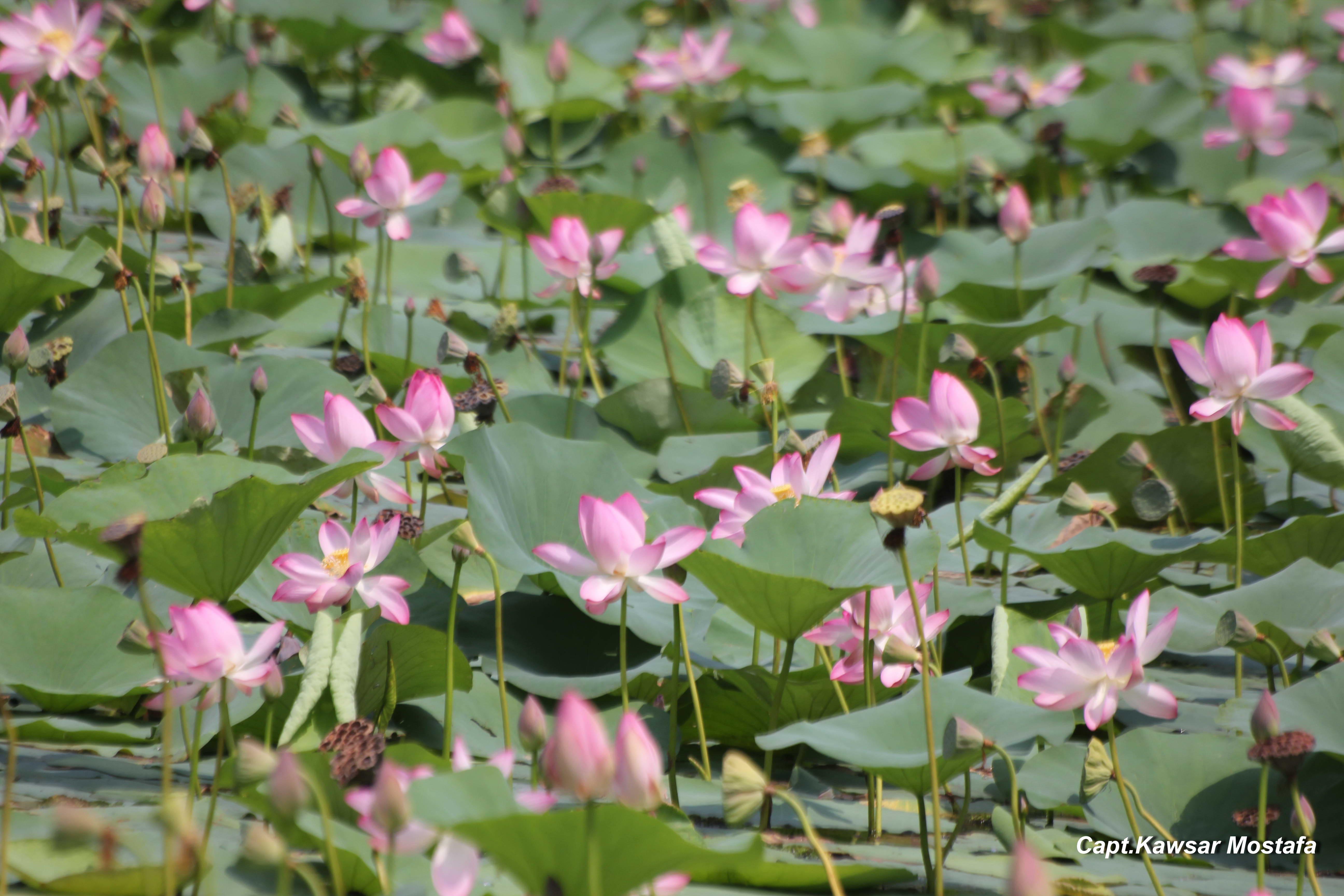 Lotuspadha nssb habitat mightylinksfo