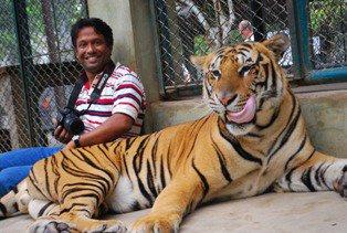 Human and Tiger