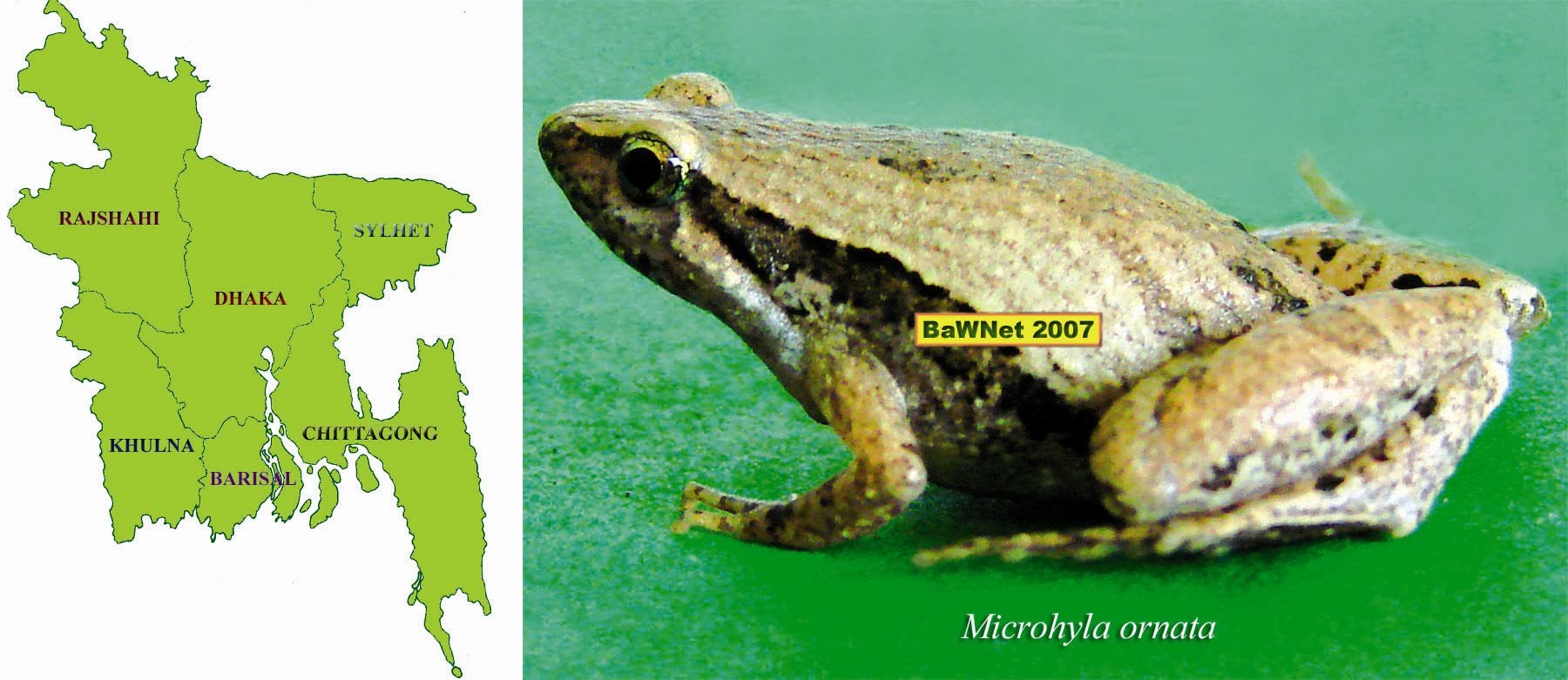 Amphibians: names, descriptions, photos