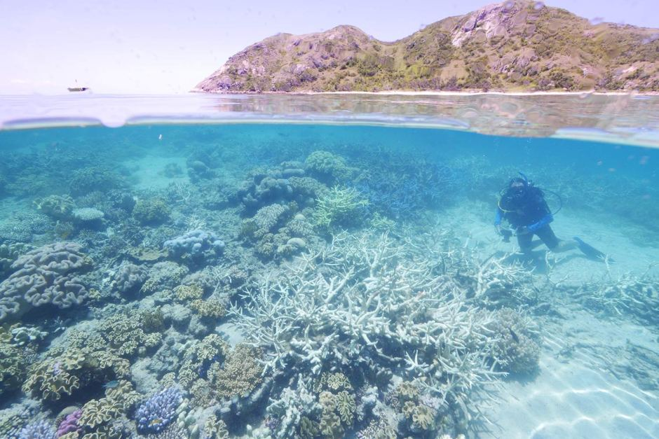 Worst bleaching on record for Great Barrier Reef: scientists