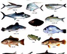 সিলেট অঞ্চলে ৪৬ জাতের মাছ বিলুপ্তির পথে