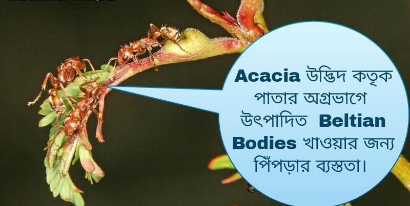Ant eting leaf