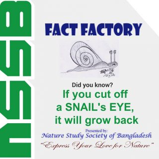 If you cut off a Snail's eye, it will grow back