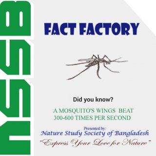 A Mosquito's wings beat 300-600 times per second