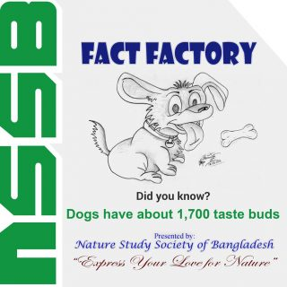 Dogs have about 1,700 taste buds