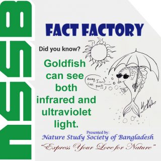 Goldfish can see both infrared and ultraviolet light