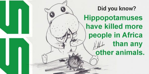 Hippopotamuses have killed more people in Africa than any other animals