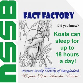 Koala can sleep for upto 18 hours a day!