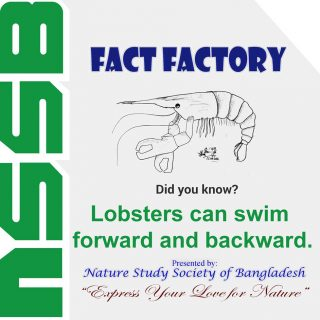 Lobsters can swim both forwards and backwards