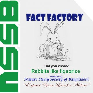 Rabbits like liquorice