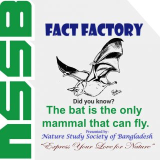 The bat is the only mammal that can fly.