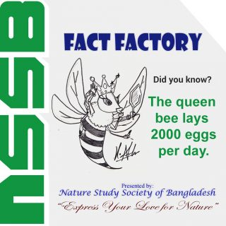The queen bee lays 2000 eggs per day