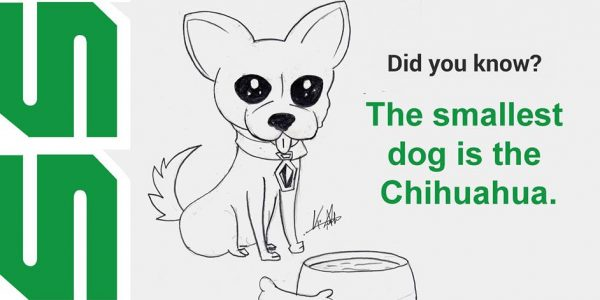 The smallest dog is the Chihuahua