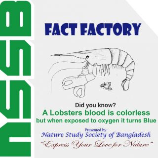 A Lobsters blood is colorless but when exposed to oxygen it turns Blue