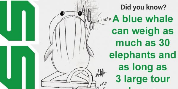 A blue whale can weigh as much as 30 elephants and as long as 3 large tour buses