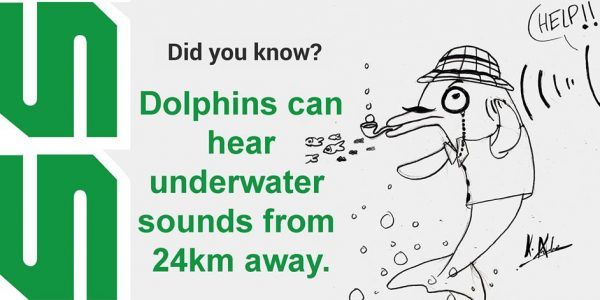 Dolphins can hear underwater sounds from 24km away