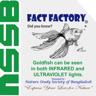 Goldfish can be seen in both INFRARED and ULTRAVIOLET lights