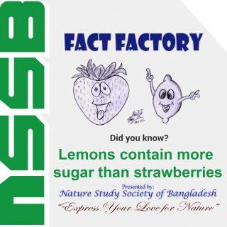 Lemons contain more sugar than strawberries