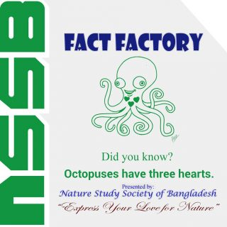 Octopuses have three hearts