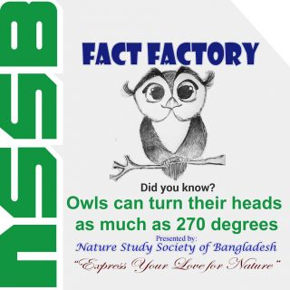 Owls can turn their heads as much as 270 degrees