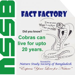 Cobras can live for upto 20 years