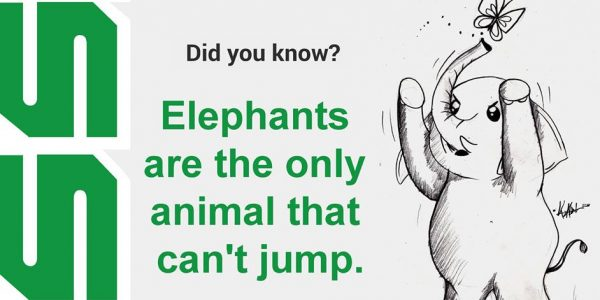 Elephants are the only animals that can't jump