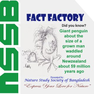 Giant penguin about the size of a grown man waddled around New Zealand about 59 million years ago