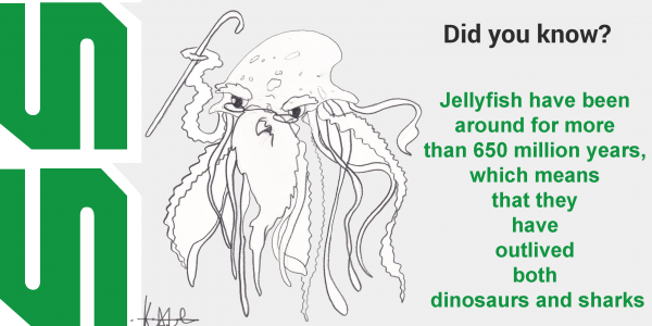 Jellyfish have been around for 650 million years, which means they have outlived dinosaurs and sharks