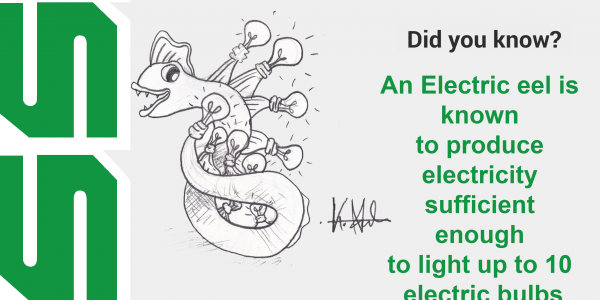 An electric eel can generate electricity suffcient enough to power up 10 electric bulbs