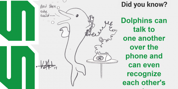 Dolphins will talk to one another over the phone and can even recognize each other's voices