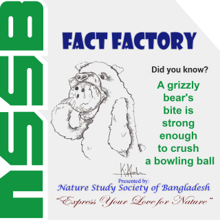 A Grizzly bear's bite is strong enough to crush a bowling ball