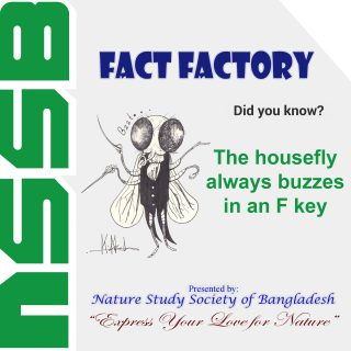 The housefly always buzzes in an F key
