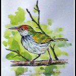 Dark Necked Tailorbird