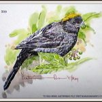 Gold Naped Finch