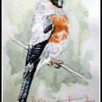 Grey Headed Bullfinch