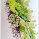 Long Tailed Parakeet