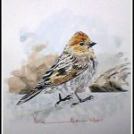 Plain Mountain Finch
