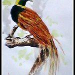 Raggiana Bird of Parqadise