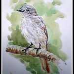 Rusty Tailed Flycatcher