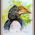 Silver Cheeked Hornbill