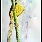 Yellow Bellied Prinia