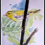 Yellow Vented Warbler
