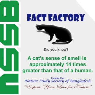 Cat's sense of smell is approximately 14 times greater that that of a human
