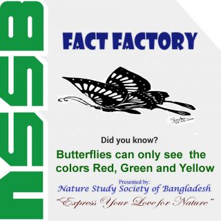 Butterflies can only see the colors Red, Green and Yellow