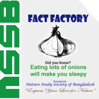 Eating lots of onions will make you sleepy