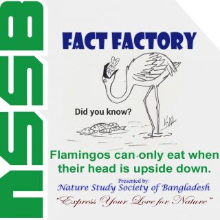 Flamingos can only eat when their head is upside down
