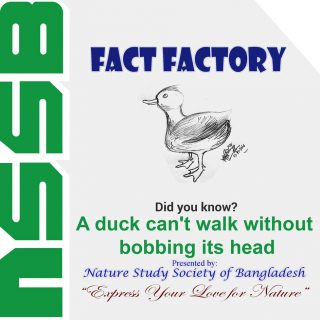 A duck can't walk without bobbing its head