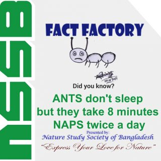 ANTS don't sleep but they take 8 minutes NAPS twice a day