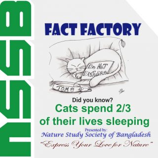 Cats spend 2/3 of their lives sleeping.