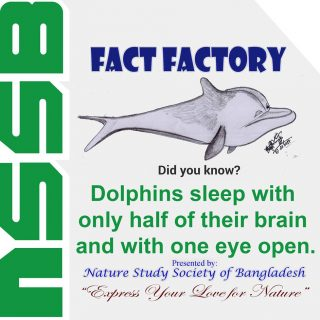 Dolphins sleep with only half of their brain and with one eye open